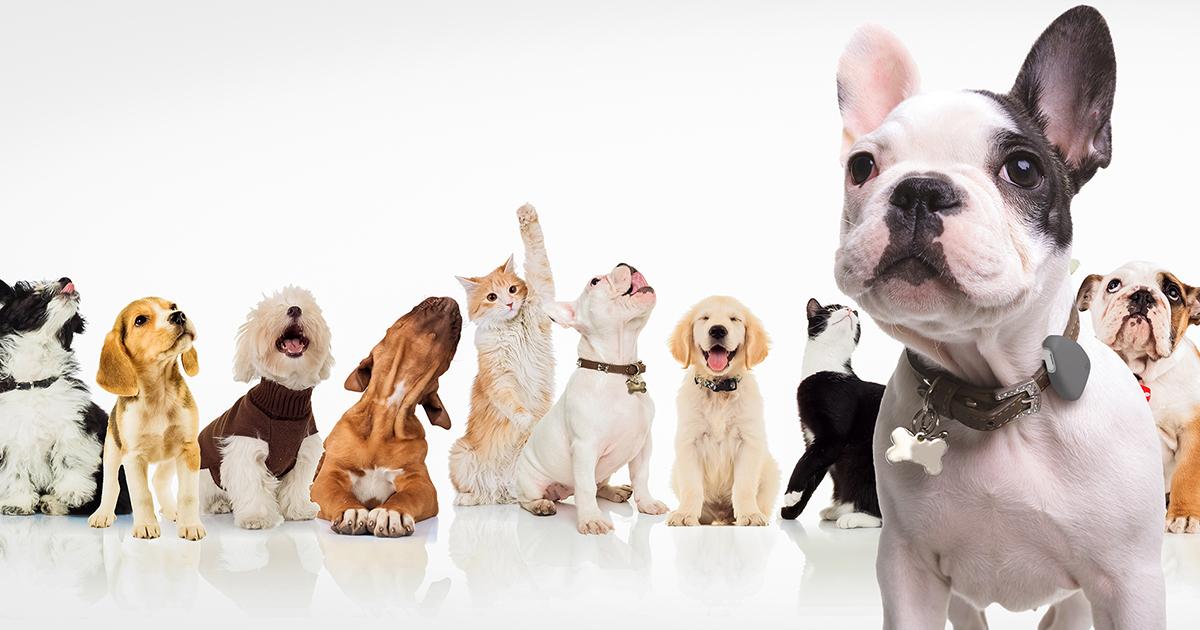 Pranic Healing em Pets?? Cura Prânica em Animais?